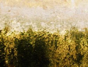 lichen-texture-11_Myq61VYO
